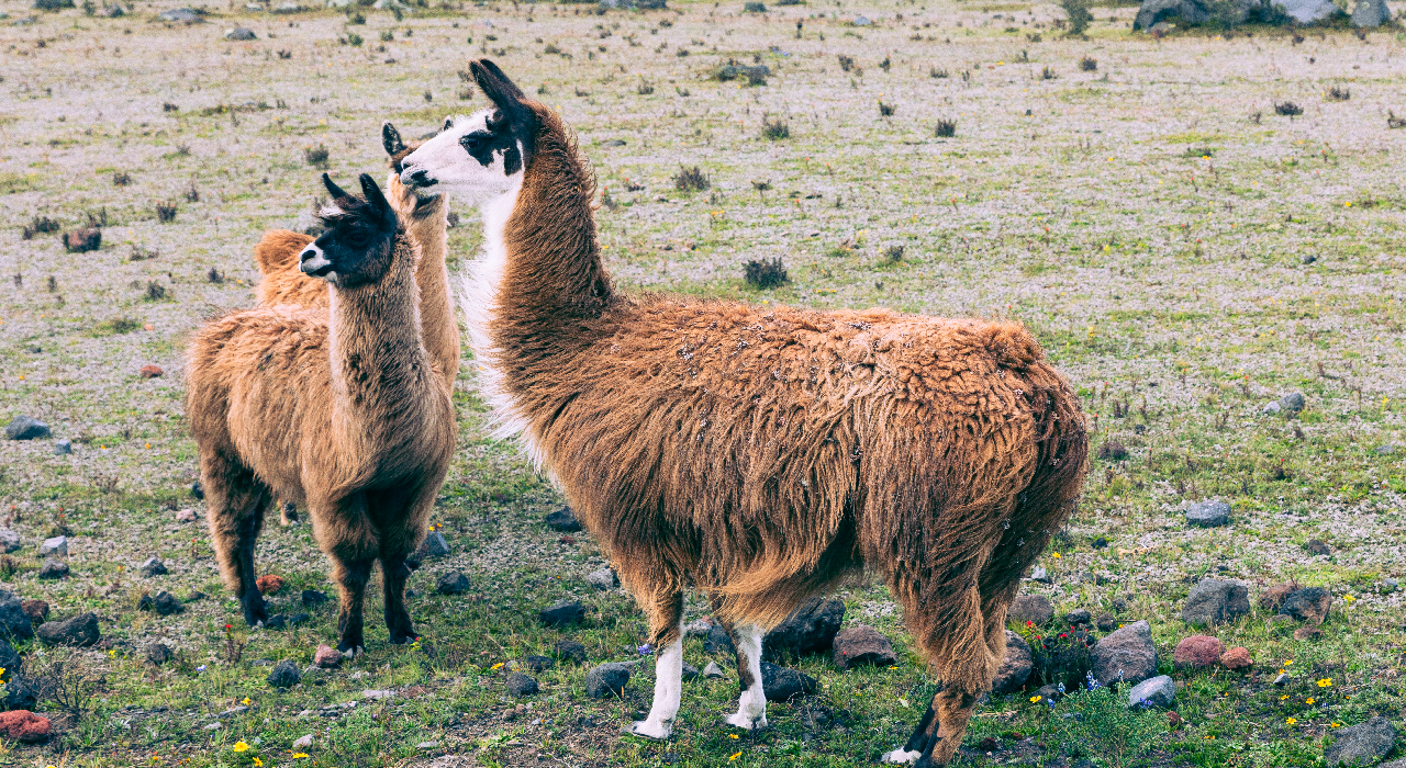 Llamas, Nanotechnology and the Search for a Cure for Parkinson's Disease